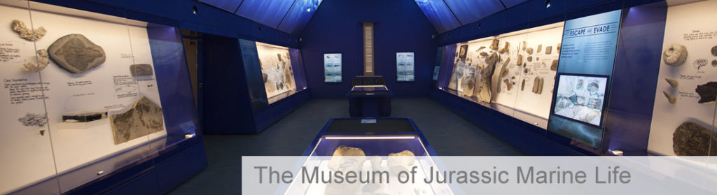 Empty and dark exhibition space with lighted zones showing fossils